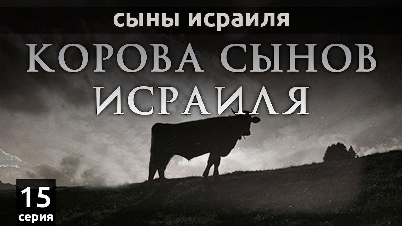 Корова сынов Исраиля | Сыны Исраиля - серия 15