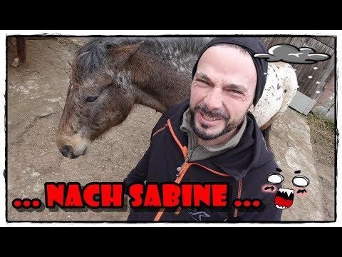 Beschattung für die Pferde Koppel / Weide - FMA | Pferde Hoschi from YouTube · Duration:  14 minutes 10 seconds