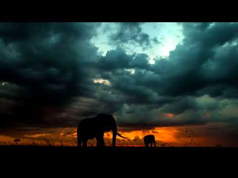 Best Relaxing Music   African Drums djembe, dunumba, instrumental 10 hours