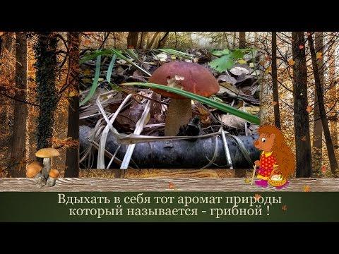 Где собирать грибы в Подмосковье: Карта грибных мест