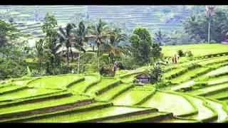 DESAKU YANG KU CINTA -  LAGU ANAK INDONESIA [BOWO Collect.]