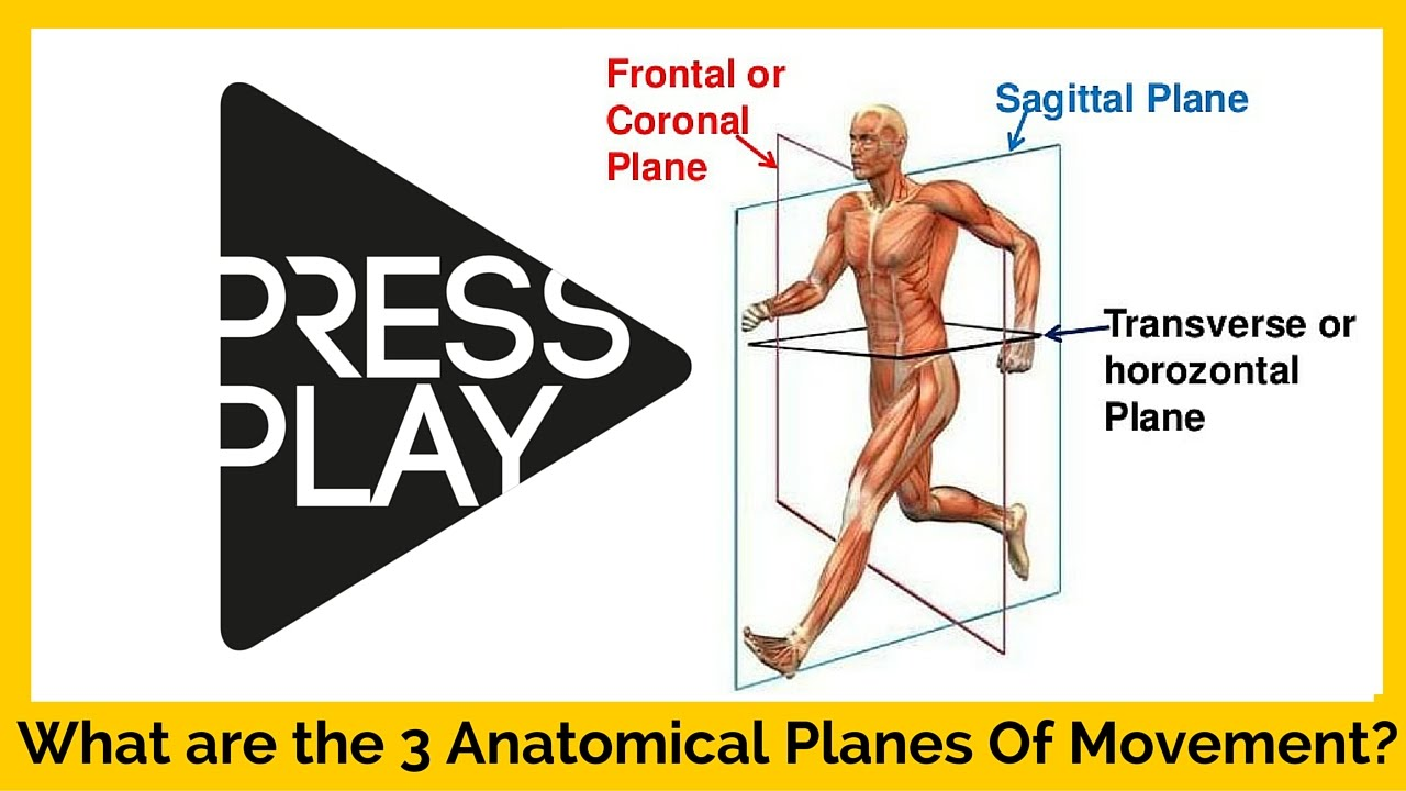 What Are The 3 Anatomical Planes Of Movement Youtube