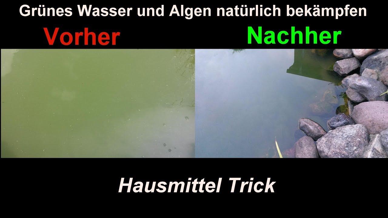 Super Algen im Gartenteich natürlich & effektiv mit Hausmitteln &NB_51
