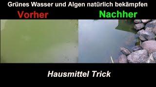 Algen im Gartenteich natürlich & effektiv mit Hausmitteln bekämpfen  Klares Teich Wasser ohne Chemie