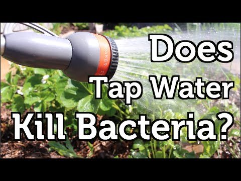 Does the Chlorine in Tap Water Harm Beneficial Bacteria?
