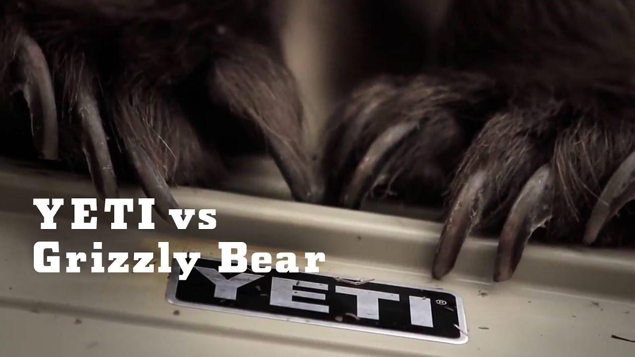 YETI vs. Grizzly Bear ...