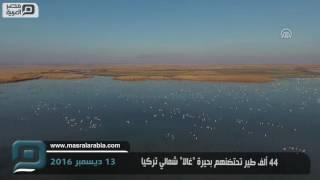 مصر العربية | 44 ألف طير تحتضنهم بحيرة