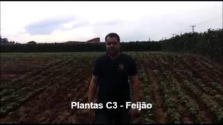 fisiologia vegetal plantas c3 c4 e cam