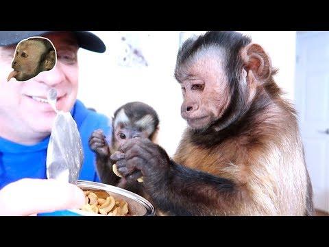 Monkeys LOVE Mr Peanut! (SURPRISE BOX)