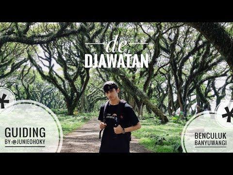 Hutan Lord Of The Rings - De DJAWATAN Banyuwangi