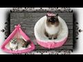DIY 😻 2 in 1 Häkel Sessel & Zelt für Katzen   crochet chair & tent for cats