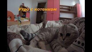 😻 Котенок Хлоя утром разбудила всю семью 🐱 5 День в Новом Доме 🐱 Dear Kitten Chloe