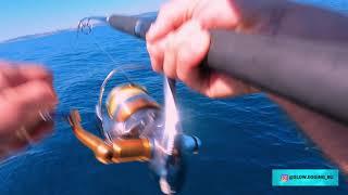 Морская рыбалка Владивосток Ловля синего тунца