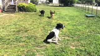 Rocky Road K9 Dog Training - Obedience Training With Distractions - Myrtle Beach, Sc