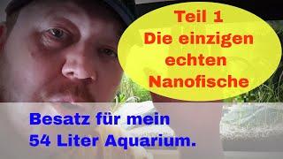 Die einzigen echten Nanofische. Fische für mein 54l Aquarium.