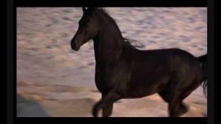 The Black Stallion AMV - River Dance