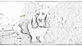 Auto Draw 2: Basset Hound