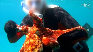 צוללנים התעללו בתמנון באילת – ונקנסו באלפי שקלים