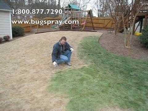 Yard Smart lawn dye