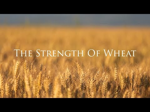 The Strength of Wheat