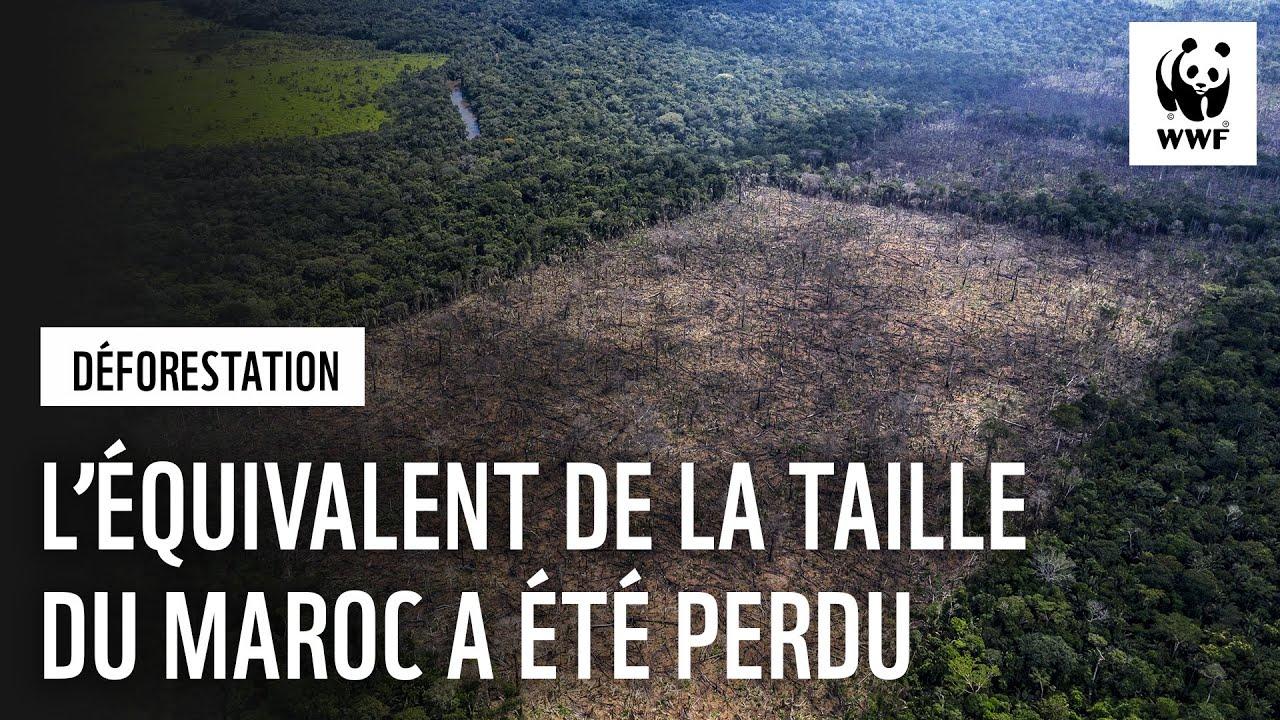Alerte sur tous les fronts : la déforestation dans le monde continue à un rythme alarmant