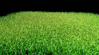 Simple grass with Lightwave