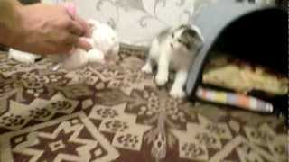 Кот боится игрушки)