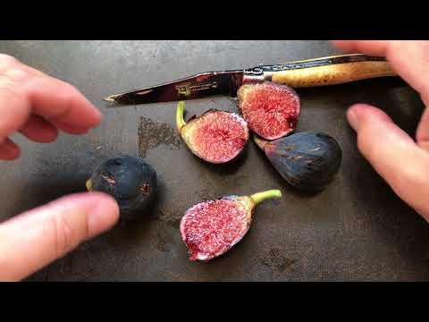 french fig farm:  Violette de Bordeaux