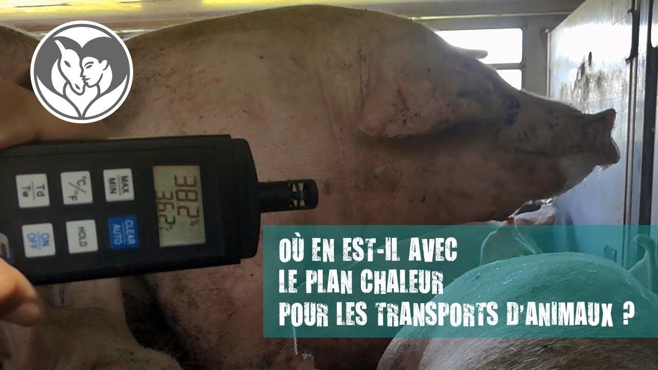 Où est le plan chaleur pour le transport d'animaux vivants ?