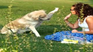 Agressive Dog Behavior Dog Training In Denver