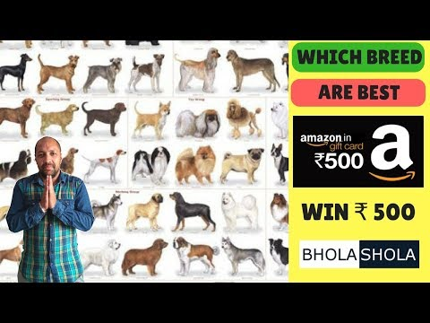 Pet Breed - Which breed Are Best - Bhola Shola