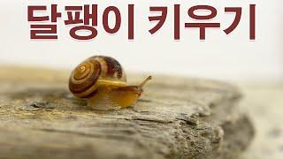 달팽이 키우기 달팽이와 놀기,보살피기,달팽이 동면 모습…