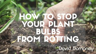 Stop Bulbs Rotting in the Soil: David Domoney's Gardening Quick Tips