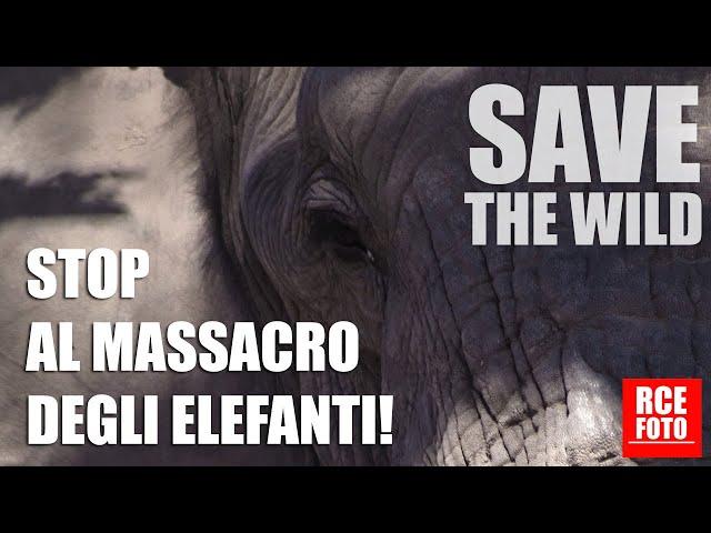 12 Gennaio 2021 - STOP AL MASSACRO DEGLI ELEFANTI!