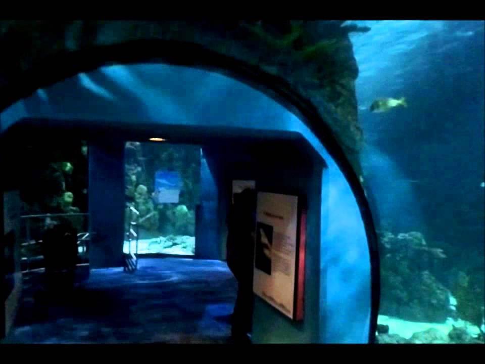 Moody Gardens Aquarium Galveston TX YouTube