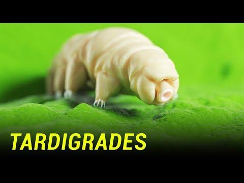 Human Cells Fused with Tardigrade Genes