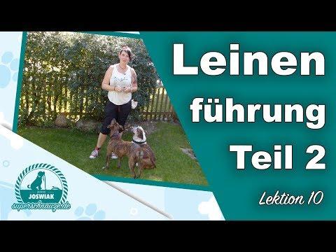 Leinenführung mit Halti oder Doppelführung  - Hund zieht an der Leine - Teil 2