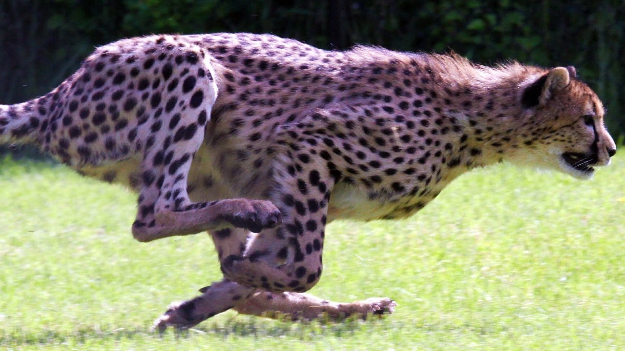 SPEED FREAKS! 10 of THE FASTEST ANIMALS in the world ...