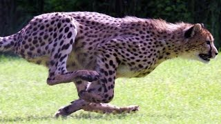 SPEED FREAKS! 10 of THE FASTEST ANIMALS in the world! (World