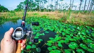 Catching BIG Bass in THICK Lily Pads!!!