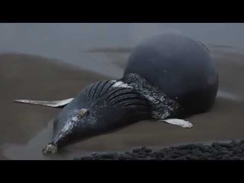 Dead Whale Washes Up On Oregon Shore