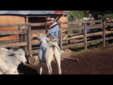 Paraguay Ferme / Paraguay Farm