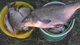 Лещ на резинку и караси на поплавок. My fishing.