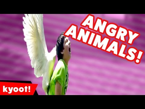 When Animals Attack Compilation of 2016 | Kyoot Animals