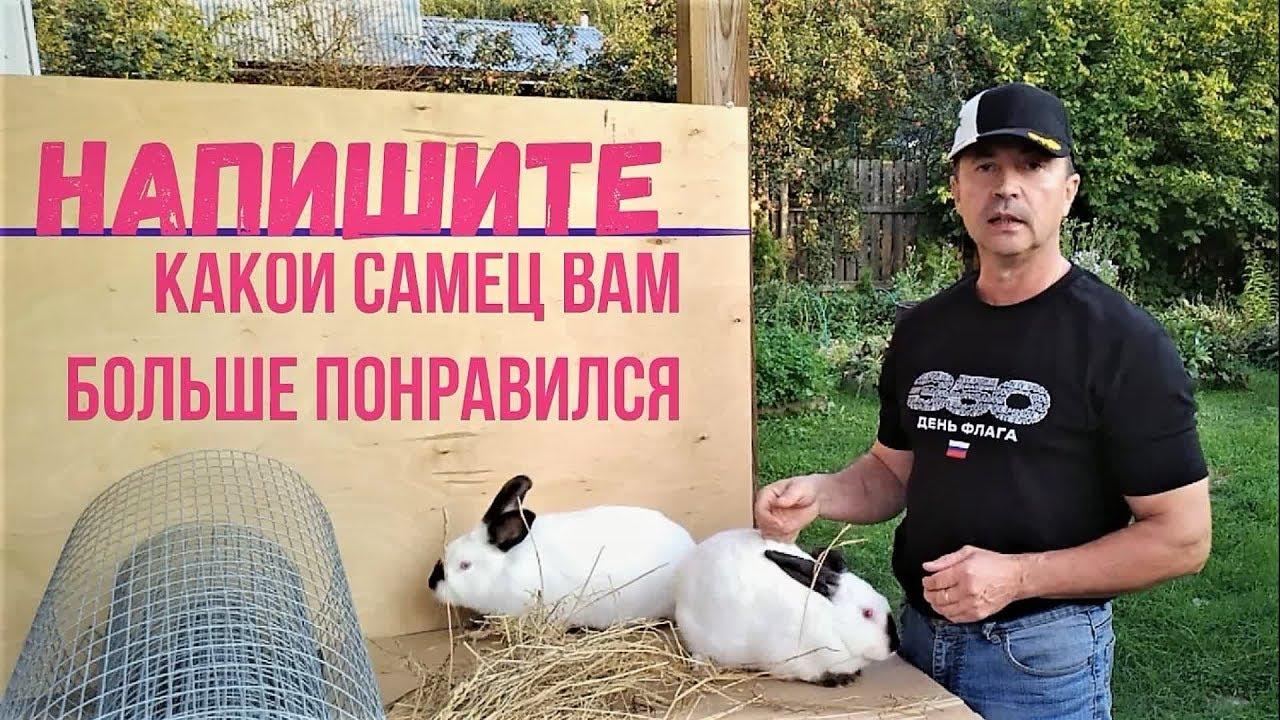 Некоторые моменты из жизни кроликов о которых вы наверное знали.