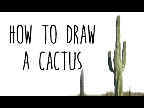 how to draw a cactus drawing plants with kids youtube. Black Bedroom Furniture Sets. Home Design Ideas