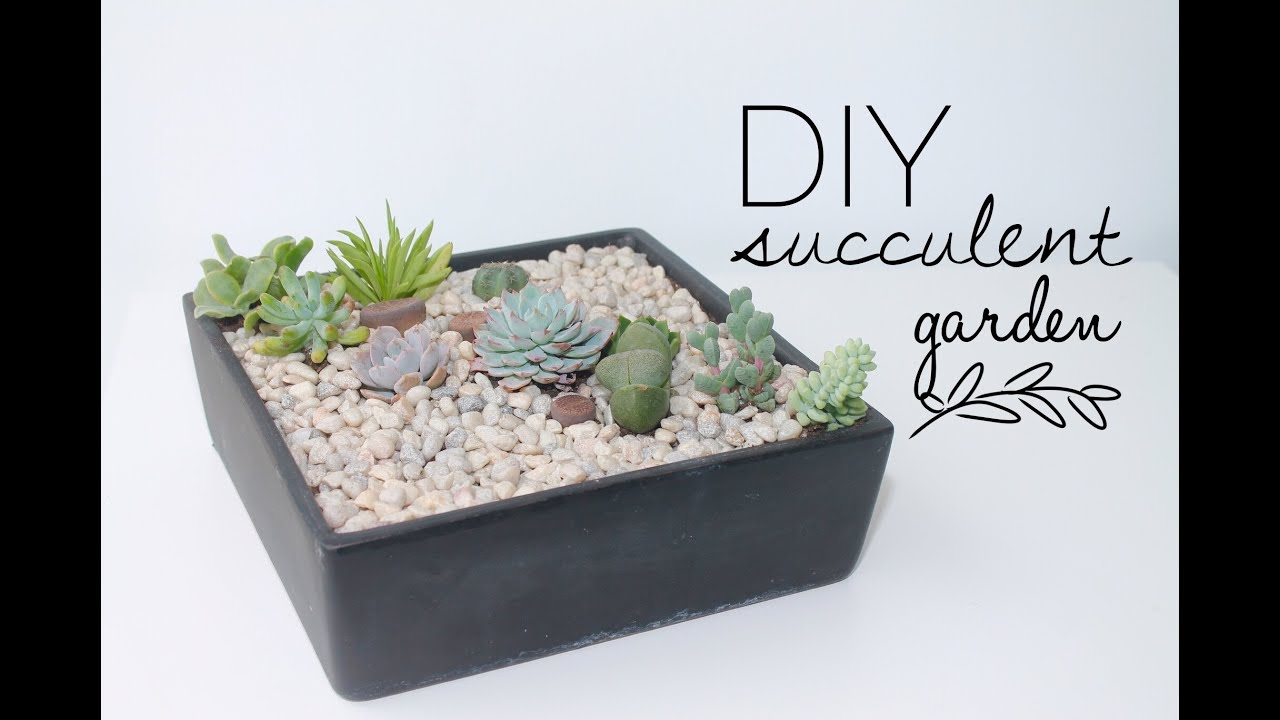 Diy Tutorial How To Make A Succulent Garden Youtube