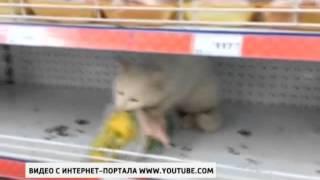 Кот пойман за поглощением украденной курицы прямо в супермаркете