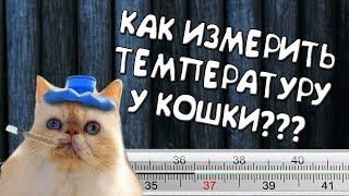 Жар у кошки? Как измерить температуру у вашей кошки!