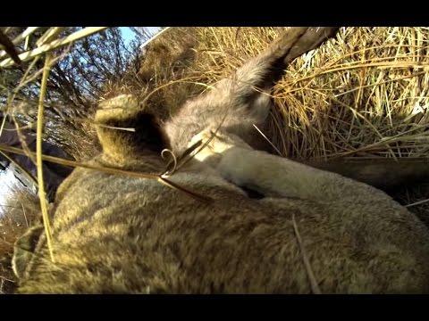 Lion's First Kill Captured | The Lion Whisperer